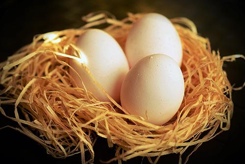 Huevos ecológicos Madrid