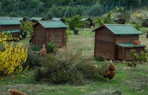 comprar huevos ecologicos