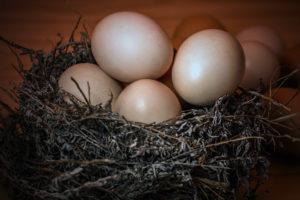 venta de huevos camperos