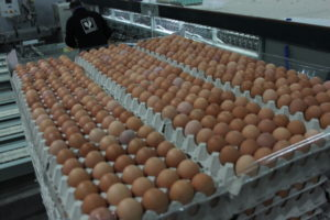 comprar huevos por mayor