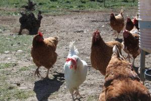 huevos ecologicos precio