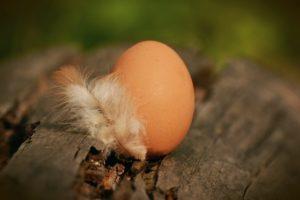 huevos camperos en Madrid