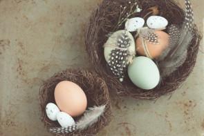 color cascara huevos