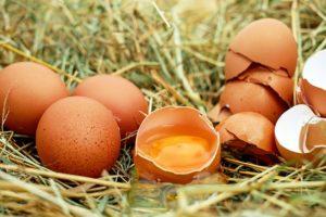 granjas ecológicas de gallinas