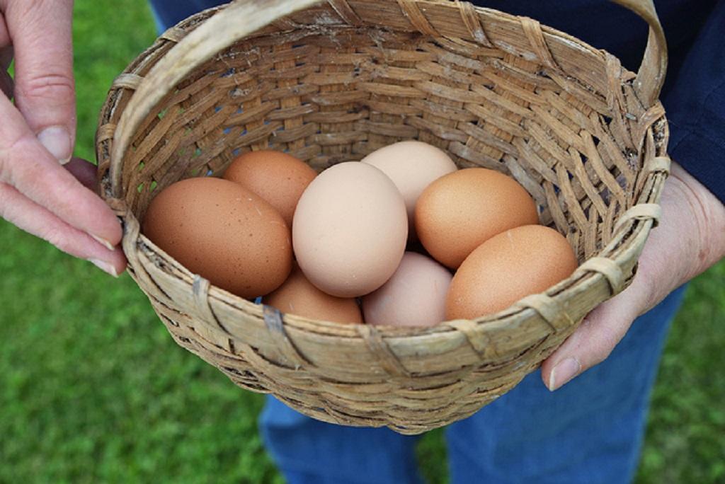 Beneficios de los huevos camperos